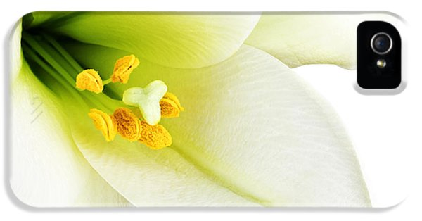 Delicate iPhone 5 Cases - White lilly macro iPhone 5 Case by Johan Swanepoel