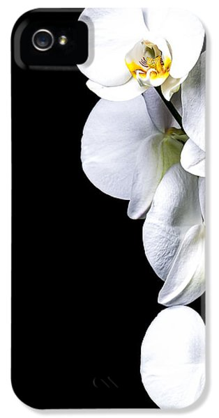 Anniversary iPhone 5 Cases - White Orchid II iPhone 5 Case by Erik Brede