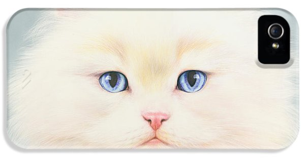 Portraits iPhone 5 Cases - White Persian iPhone 5 Case by Andrew Farley