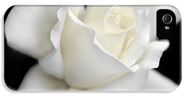 Ivory Rose iPhone 5 Cases - White Rose Flower Splendor  iPhone 5 Case by Jennie Marie Schell