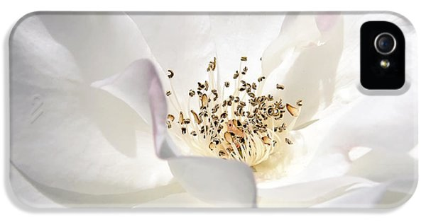 Ivory Rose iPhone 5 Cases - White Rose Petals iPhone 5 Case by Jennie Marie Schell