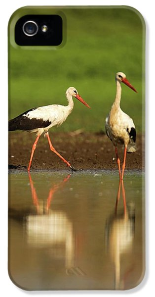 White Stork (ciconia Ciconia) IPhone 5 / 5s Case by Photostock-israel