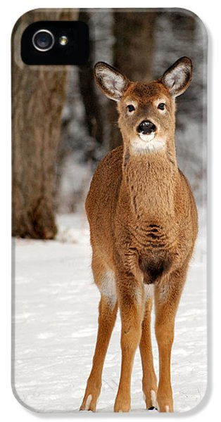 Whitetail In Snow IPhone 5 / 5s Case by Christina Rollo