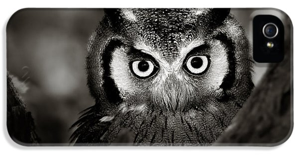 Prey iPhone 5 Cases - Whitefaced Owl iPhone 5 Case by Johan Swanepoel
