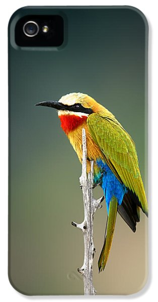 Bee iPhone 5 Cases - Whitefronted Bee-eater iPhone 5 Case by Johan Swanepoel