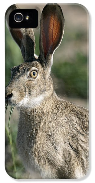 Jackrabbit iPhone 5 Cases - Who Me ?  Jackrabbit iPhone 5 Case by Gary Langley