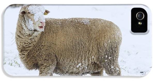 Ewe iPhone 5 Cases - Who threw the Snowball iPhone 5 Case by Mike  Dawson