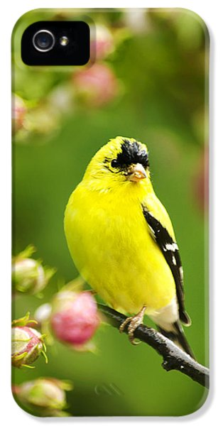 State Bird iPhone 5 Cases - Wild Birds - Garden Goldfinch iPhone 5 Case by Christina Rollo