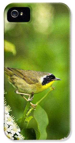 Bird Watcher iPhone 5 Cases - Wild Birds - Male Common Yellowthroat Warbler iPhone 5 Case by Christina Rollo