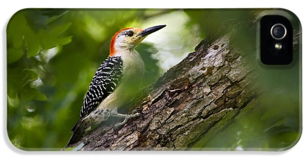 Red Bellied Woodpecker IPhone 5 / 5s Case by Christina Rollo