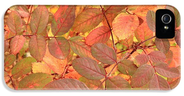 Rosa Acicularis iPhone 5 Cases - Wild Rose leaves in autumn iPhone 5 Case by Jim Sauchyn