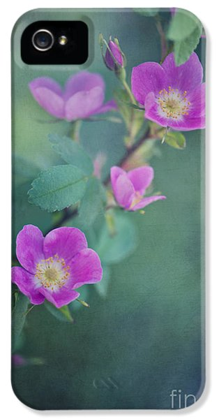Rosa Acicularis iPhone 5 Cases - Wild Roses iPhone 5 Case by Priska Wettstein