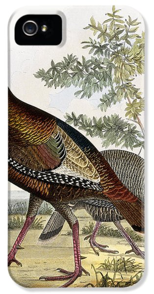 Wild Turkey IPhone 5 / 5s Case by Titian Ramsey Peale
