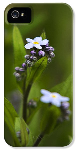 Forget Me Not iPhone 5 Cases - Wildflowers - Forget Me Not iPhone 5 Case by Christina Rollo