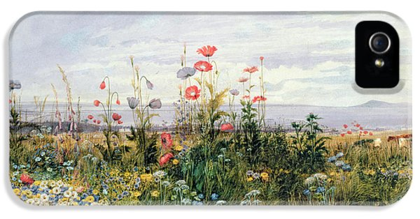 Meadow iPhone 5 Cases - Wildflowers with a View of Dublin Dunleary iPhone 5 Case by A Nicholl