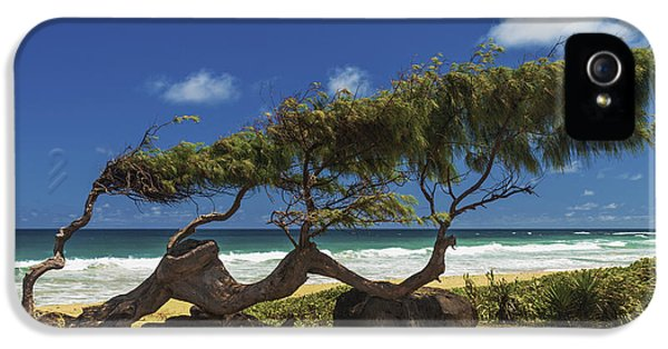 Wind iPhone 5 Cases - Wind Blown Tree iPhone 5 Case by Brian Harig