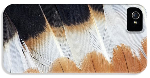 Wing Fanned Out On Northern Lapwing IPhone 5 / 5s Case by Darrell Gulin