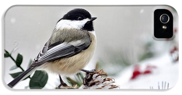 Winter Chickadee IPhone 5 / 5s Case by Christina Rollo