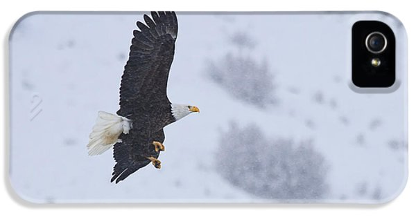 American Bald Eagle iPhone 5 Cases - Winter Flight iPhone 5 Case by Mike  Dawson