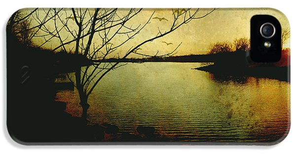 Burnt Umber iPhone 5 Cases - Winter Moody Sunset  iPhone 5 Case by Ann Powell