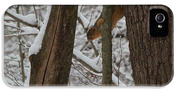 Winter Squirrel IPhone 5 / 5s Case by Dan Sproul