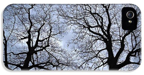Winter Trees IPhone 5 / 5s Case by Elena Elisseeva