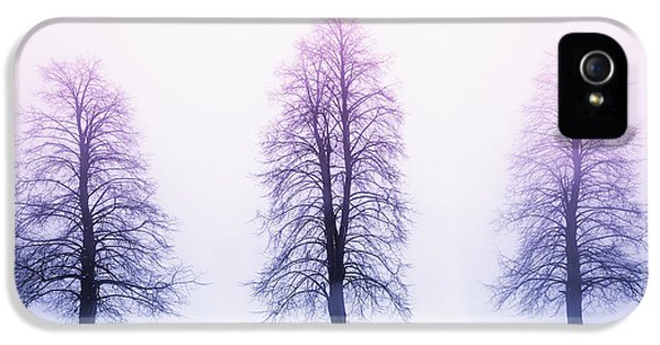 Trees iPhone 5 Cases - Winter trees in fog at sunrise iPhone 5 Case by Elena Elisseeva