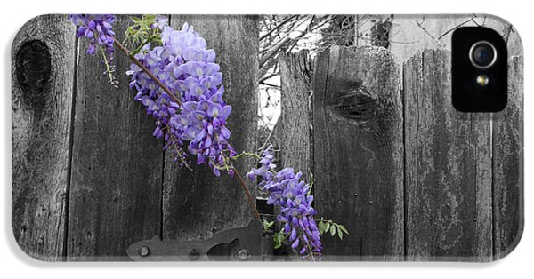 Wisteria IPhone 5 / 5s Case by Dylan Punke