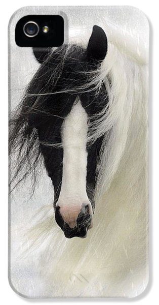Equine iPhone 5 Cases - Wisteria  iPhone 5 Case by Fran J Scott