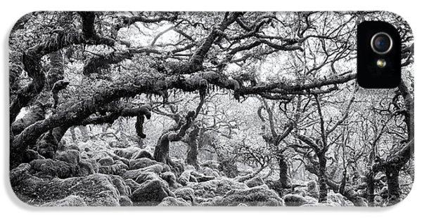 Wistmans Wood Dartmoor Devon  IPhone 5 / 5s Case by Tim Gainey