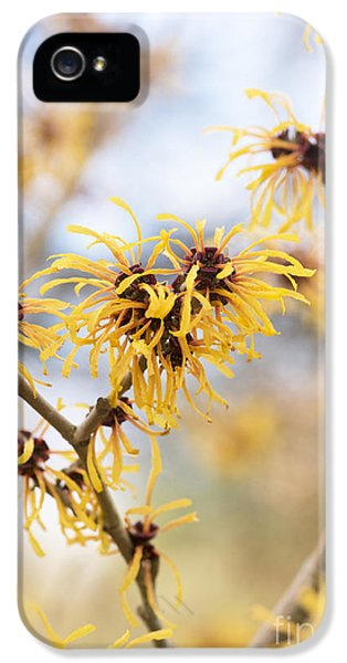 Witch iPhone 5 Cases - Witch Hazel iPhone 5 Case by Tim Gainey