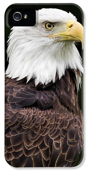 Avian iPhone 5 Cases - With Dignity iPhone 5 Case by Dale Kincaid