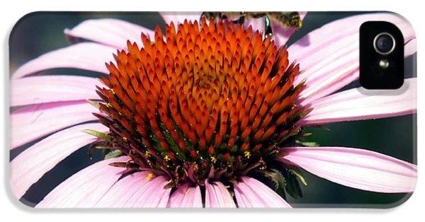 Echinacea iPhone 5 Cases - WONDER of POLLEN iPhone 5 Case by Karen Wiles