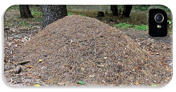 Wood Ant Nest IPhone 5 / 5s Case by Bildagentur-online/mcphoto-schulz