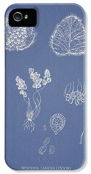 Fern iPhone 5 Cases - Woodsia lanosa iPhone 5 Case by Aged Pixel