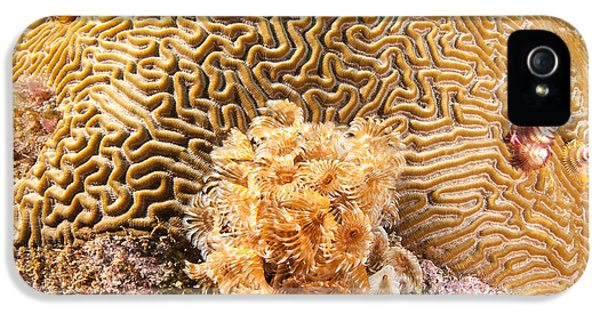 Polyp iPhone 5 Cases - Worm infested brain iPhone 5 Case by Jean Noren