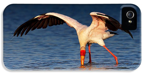 Prey iPhone 5 Cases - Yellow-billed Stork hunting for food iPhone 5 Case by Johan Swanepoel