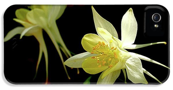 Flower iPhone 5 Cases - Yellow Columbine iPhone 5 Case by Rona Black