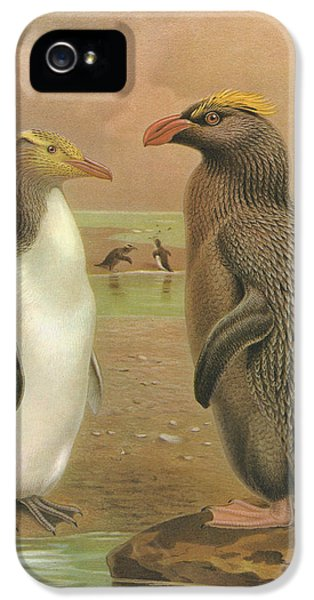 Yellow Eyed Penguin And Snares Crested Penguin  IPhone 5 / 5s Case by J G Keulemans