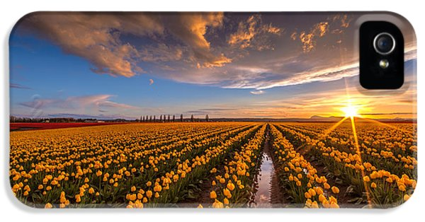 Tulips iPhone 5 Cases - Yellow Fields and Sunset Skies iPhone 5 Case by Mike Reid