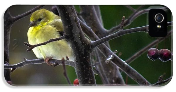 Yellow Finch IPhone 5 / 5s Case by Karen Wiles