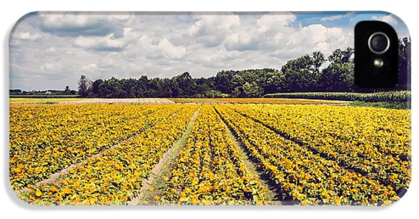 Beautiful Day iPhone 5 Cases - Yellow Flower Farm iPhone 5 Case by Wim Lanclus