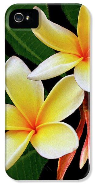 Plumerias iPhone 5 Cases - Yellow Plumeria iPhone 5 Case by Ben and Raisa Gertsberg