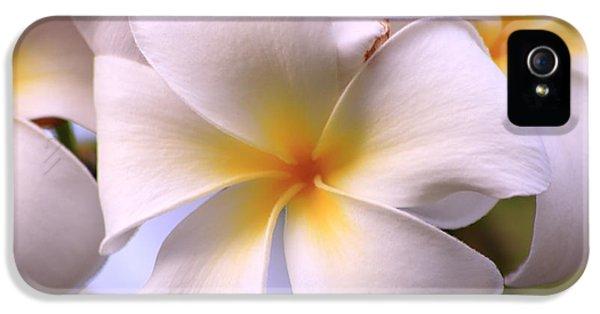 Yellow And White Plumeria Flower Frangipani iPhone 5 Cases - Yellow Plumeria iPhone 5 Case by Richard Cheski