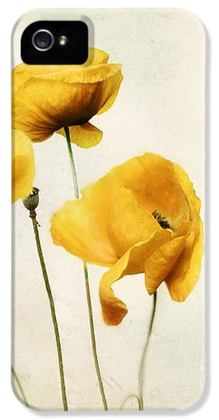 Poppy iPhone 5 Cases - Yellow Poppy Photography - Yellow Poppies - Yellow Flowers - Olive Green Yellow Floral Wall Art iPhone 5 Case by Amy Tyler