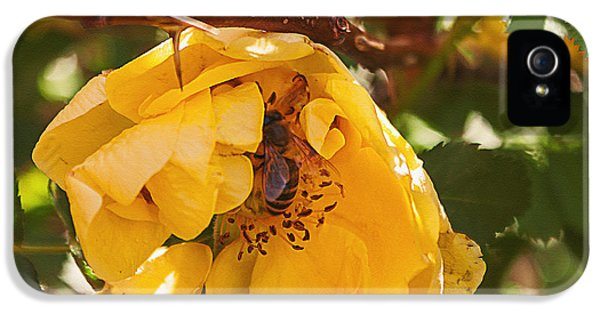 Prickly Rose iPhone 5 Cases - Yellow Rose Hides Bee iPhone 5 Case by Janice Rae Pariza