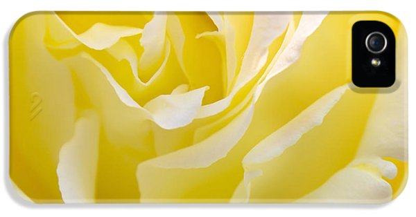 Close Up iPhone 5 Cases - Yellow Rose iPhone 5 Case by Svetlana Sewell