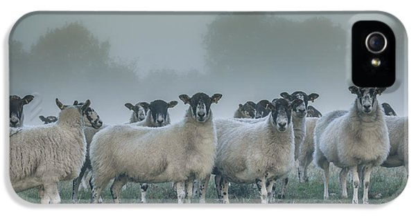 Ewe iPhone 5 Cases - You and ewes army? iPhone 5 Case by Chris Fletcher
