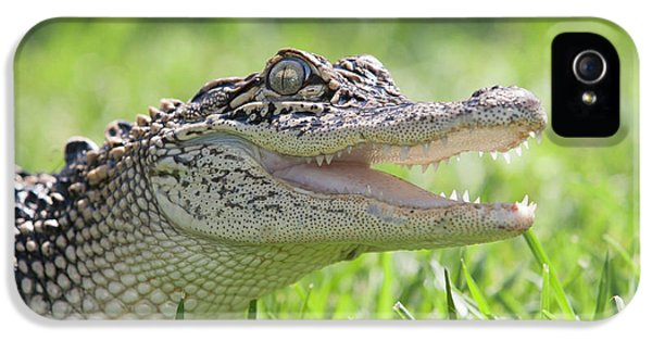 Young Alligator With Mouth Open IPhone 5 / 5s Case by Piperanne Worcester