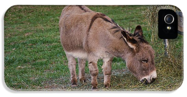Donkey iPhone 5 Cases - Young Donkey Eating iPhone 5 Case by Chris Flees